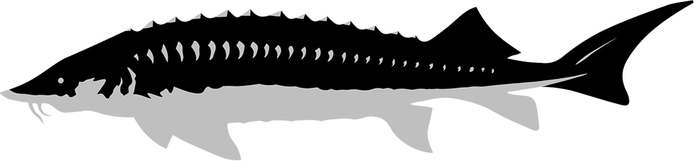 caviarstar-siberian-black3-med.jpg