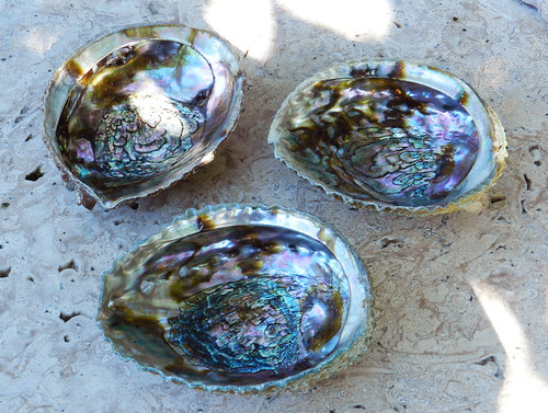 """Abalone Shell Smudge Vessel 6"""""""