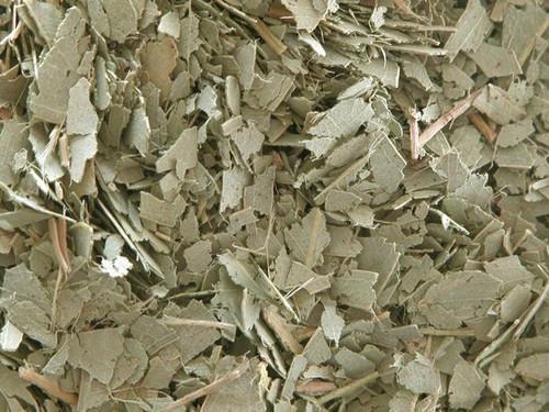 Eucalyptus Leaf ~ Herbal Alchemy