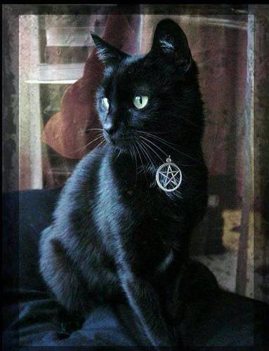 Witches Familiar Pentacle Cat Collar . Black, Blue, Orange, Purple or Red . Adjustable