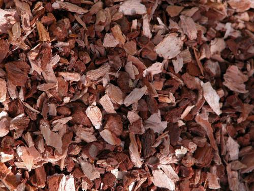 Sweet Pine  ~ Herbal Alchemy