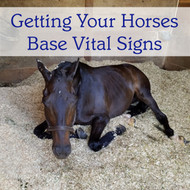 Getting Your Horse's Base Vital Signs
