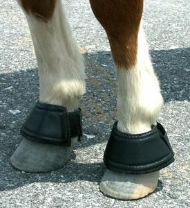 https://d3d71ba2asa5oz.cloudfront.net/12002466/images/mini-horse-velcro-closure-bell-boots-1__66454.jpg
