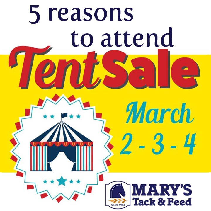 5 Reasons to Attend Mary's Tent Sale