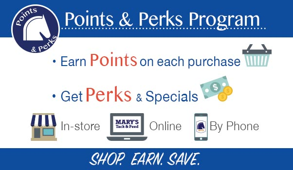 Points & Perks Program