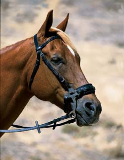 Western Hackamores - Bitless Bridles | EquestrianCollections