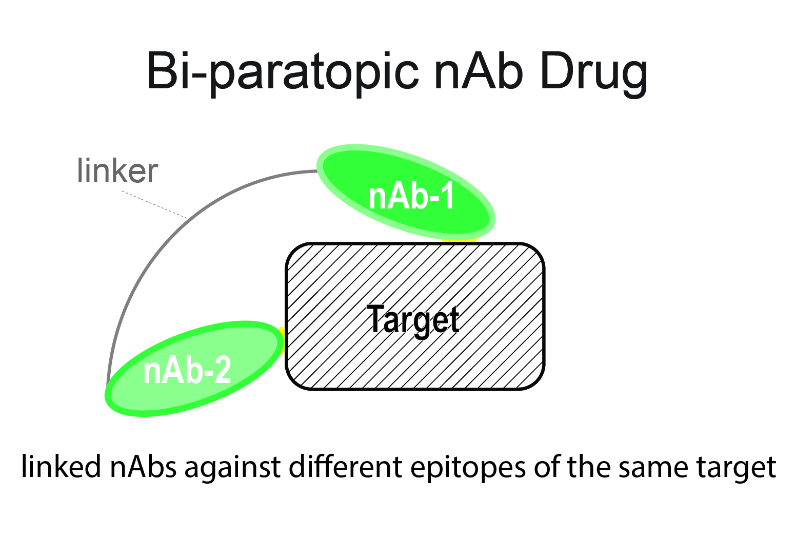 bi-paratopic nAb drug