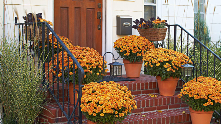 Fall Gardening Tips for All