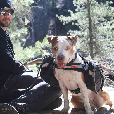 K9lifestyle Out For A Hike With The Convert Harness And Saddle Bags