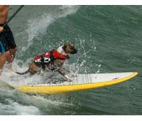 Dog Floatation Vest