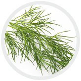 DILL EXTRACT