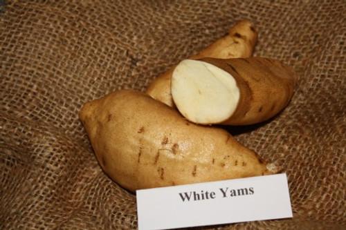 White Yam Sweet Potato -  April to June Shipping