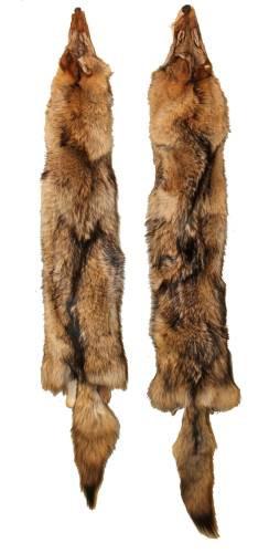 tanned coyote pelt fur tfcoy allpredatorcalls com