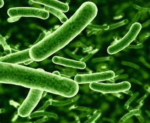 lactobacillus-strains-our-story-of-del-immune-v-for-immunity-solutions.jpg