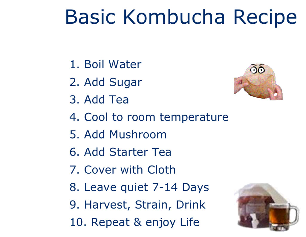 Make Kombucha at home for free