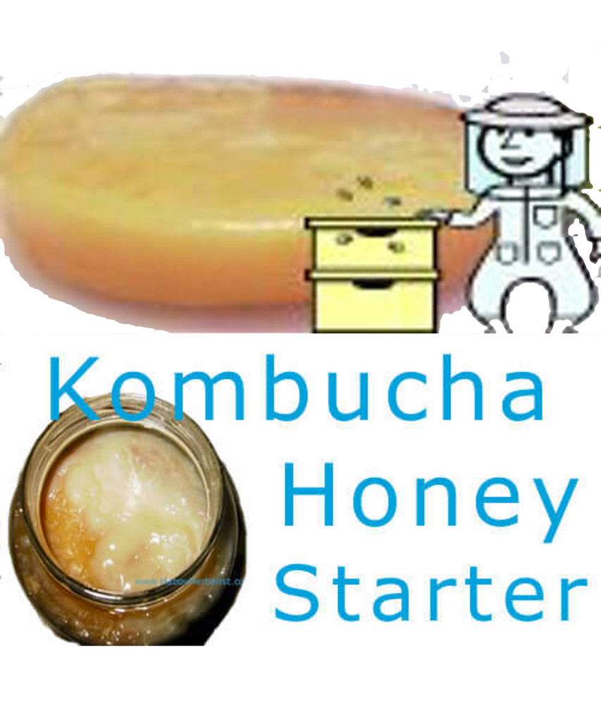 Kombucha Honey Ferment. Get Started Today.