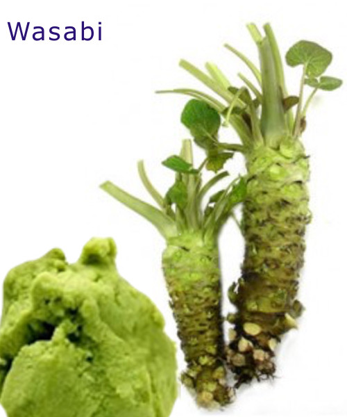 Wasabi - Hot, Spicy and Healthy