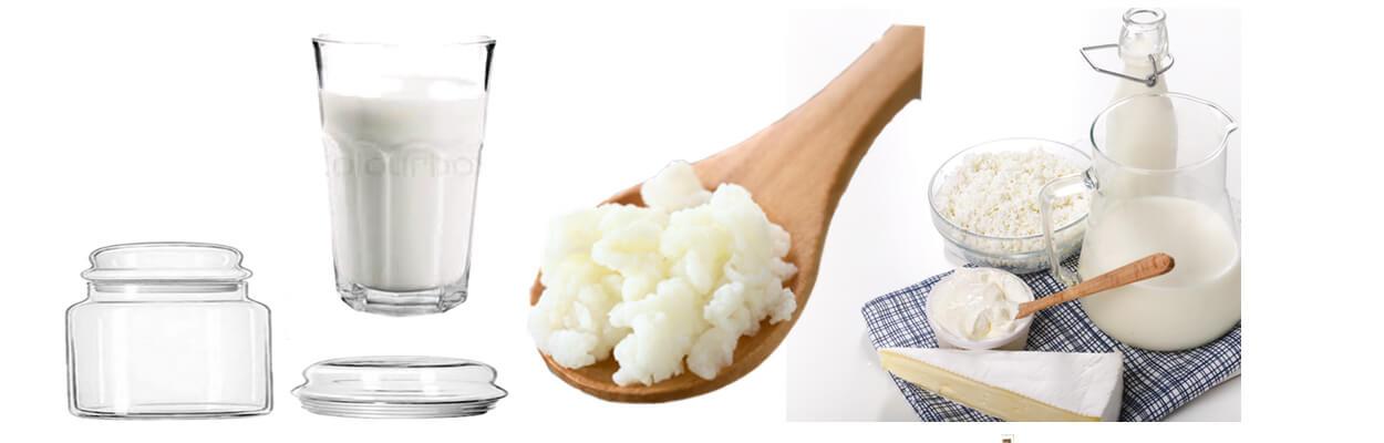 Real Milk Kefir Grains Kive Kefir Culture