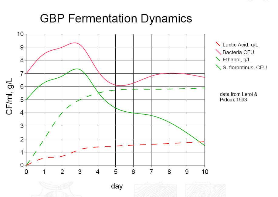 ginger-beer-ferment-dynamics.jpg