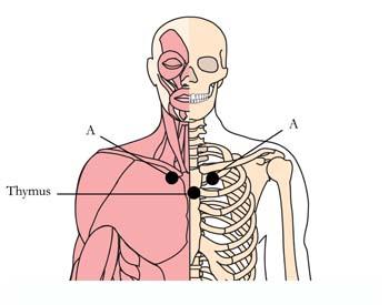 os-10-cold-flu-remedy-cell-points-tachyon-product.jpg