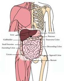 os-liv-liver-tlc-points-tachyon-products.jpg