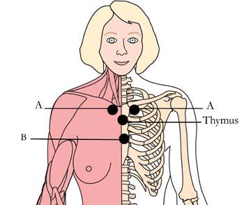 tachyon-products-os-11-estrogen-enhancing-cell-points.jpg
