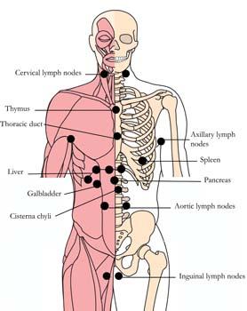 tachyon-products-os-22-lymphatic-glandular-tlc-points.jpg