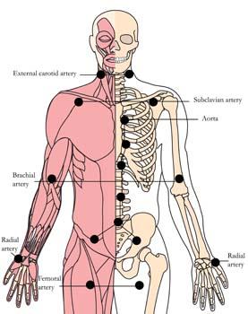 tachyon-products-os-7-cardiovascular-tlc-points.jpg