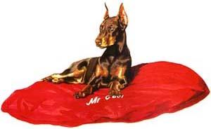 Doberman Size Pet Bede