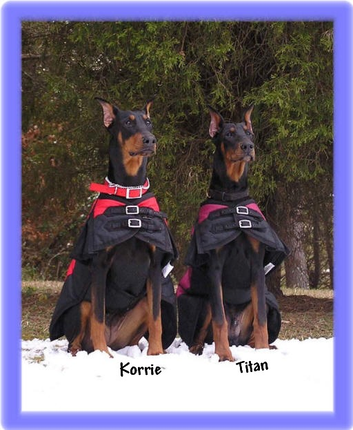 Titan when he was nine months at 75 pounds and Korrie at 80 pounds
