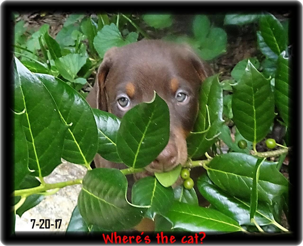 Holly - Peek a Boo Pup