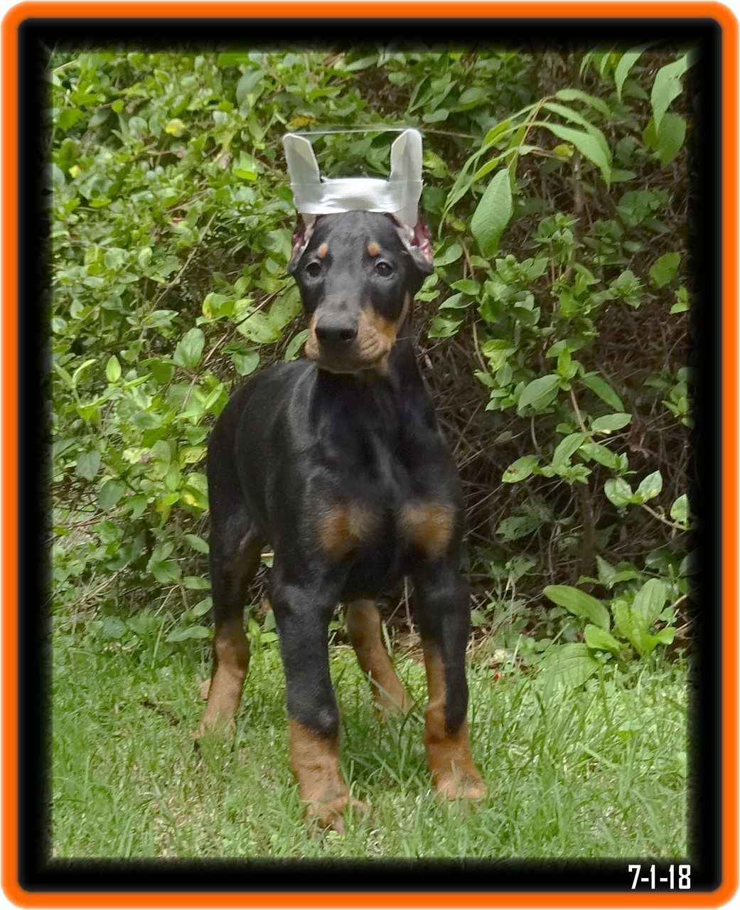 Theo  / reserved / Millersburg OH