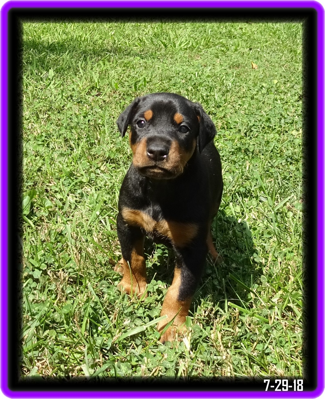 Minda - Star baby / Reserved  - Charleston SC ... started GV program