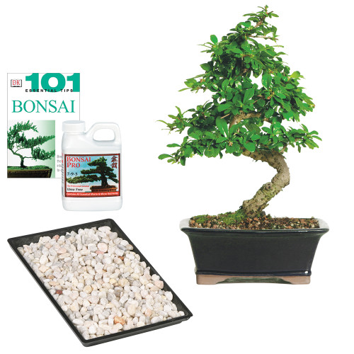 "Tis the season to wow! Our Fukien Tea Complete Gift does just that. Shipped with your tree; you'll find a 11' x 8"" humidity tray; pebbles included; to keep foliage well hydrated; our favorite Bonsai Pro fertilizer (8 oz.) and a copy of the indispensable book 101 Essential Bonsai Tips."