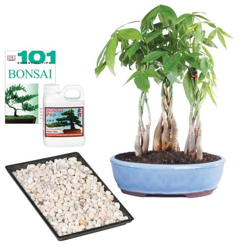 Money Tree Grove Complete Gift - DT2312MTG3CG