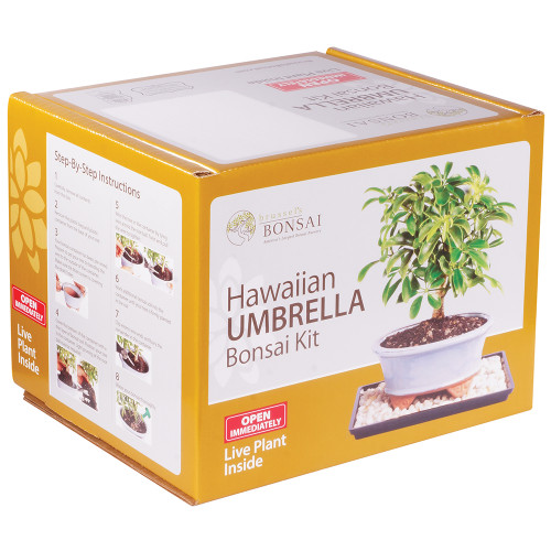 Hawaiian Umbrella - DTHUKIT