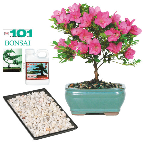 Azalea Complete Gift - DT3066AZCG