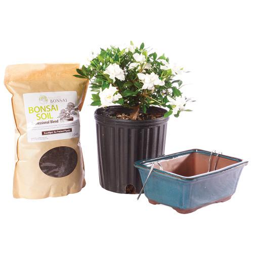 Gardenia - DTGR1GPIY
