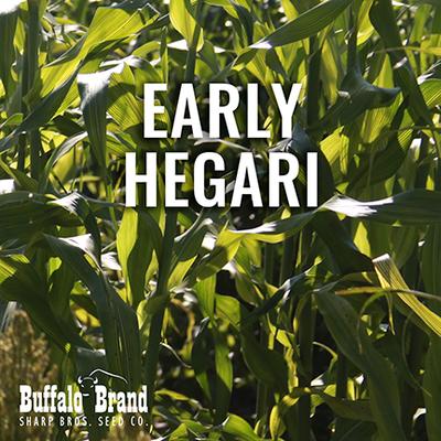 Early Hegari