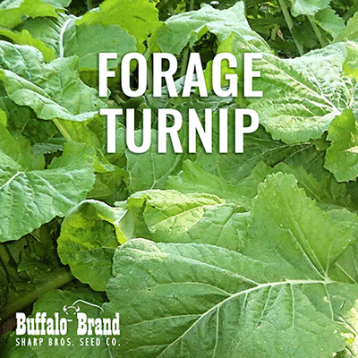 Hunter Forage Turnip