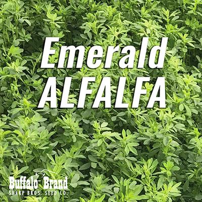 Emerald Alfalfa
