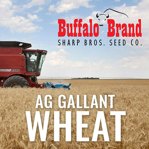 Wheat - AG Gallant  - Limited Quantities