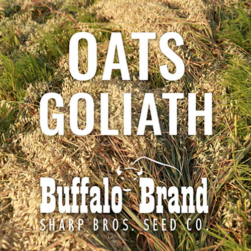 Oats - Goliath (Tall Long Season, 8 days later than Jerry)