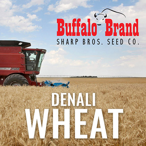 Wheat - Denali