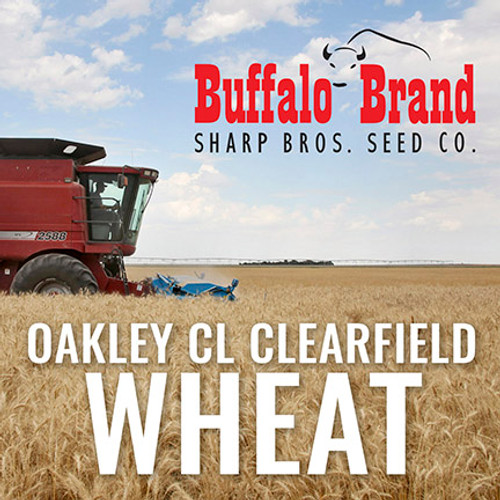 Wheat - Oakley CL