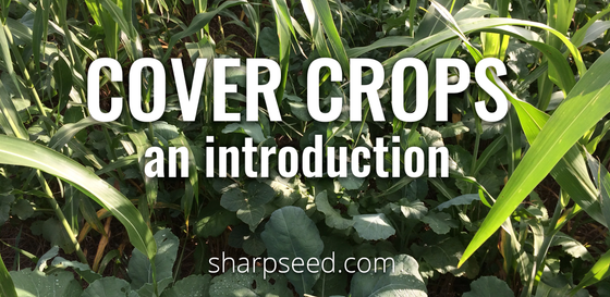 Cover Crops - An Introduction