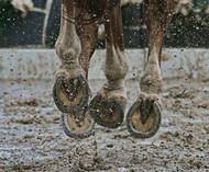 Spring Horse Health: Magnesium and Laminitis
