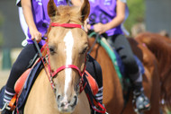 Spring Horse Health: Magnesium and Tying Up