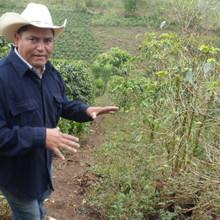 Honduras Full City Roast Coffee