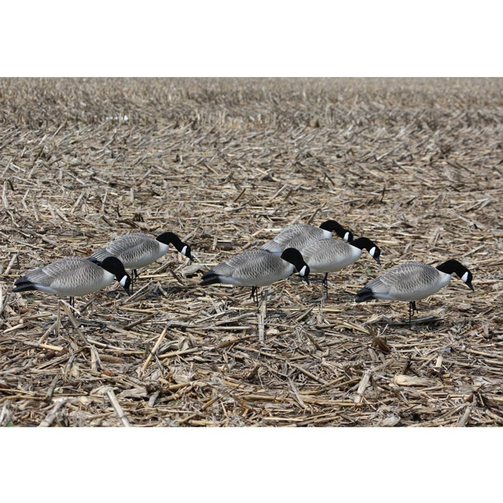 Hard Core Canada Geese, Feeder, 6 pk in field